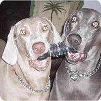 Adopt A Pet :: Gracie & Rocky - Eustis, FL