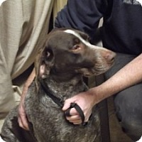 Adopt A Pet :: Buck - Streetsboro, OH