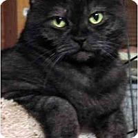 Adopt A Pet :: Kwan Yin - Davis, CA