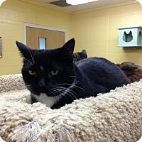 Adopt A Pet :: Blitzy - Lake Charles, LA