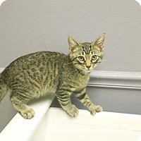 Adopt A Pet :: Rex - Medina, OH