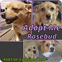 Adopt A Pet :: Rosebud - Cheney, KS