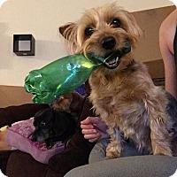Adopt A Pet :: Chloe - Burlington, NJ