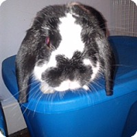 Adopt A Pet :: Bambi and Thumper - Conshohocken, PA