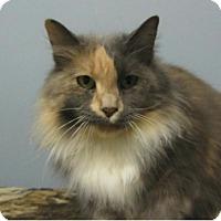Adopt A Pet :: Amelia - Kingston, WA