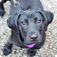 Adopt A Pet :: Dahlia - Ormond Beach, FL
