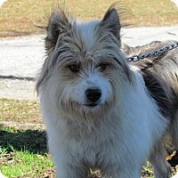Adopt A Pet :: DANDEE - Hartford, CT