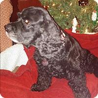 Adopt A Pet :: Magnum - Homewood, AL