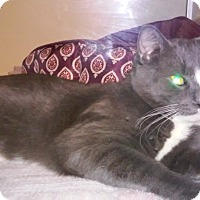 Adopt A Pet :: Simon - Franklin, NH