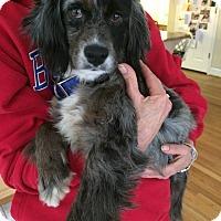 Adopt A Pet :: Callie - Alpharetta, GA