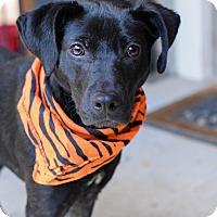 Adopt A Pet :: Odom - Baton Rouge, LA