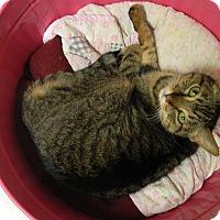 Adopt A Pet :: Vero - Jupiter, FL