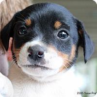 Adopt A Pet :: Jethro - Bedford, VA