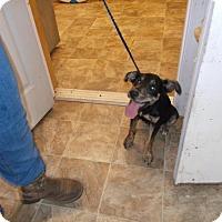 Adopt A Pet :: Simon - Lewisburg, TN