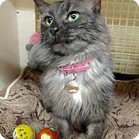 Adopt A Pet :: Whitney - Maryville, TN