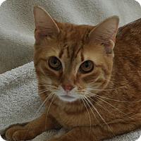 Adopt A Pet :: Bok Choy - Gaithersburg, MD
