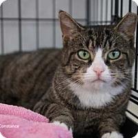 Adopt A Pet :: Constance - Merrifield, VA