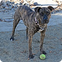 Adopt A Pet :: Hope - Gardnerville, NV