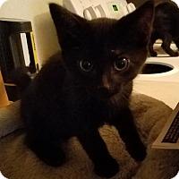 Adopt A Pet :: Tinsel - Toledo, OH