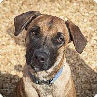 Adopt A Pet :: Rudy - 25586 - Petaluma, CA