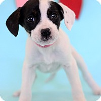 Adopt A Pet :: Ember - Waldorf, MD