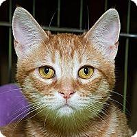 Adopt A Pet :: Rusty M - Sacramento, CA