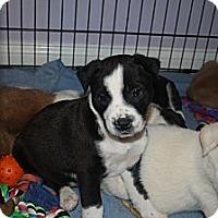 Adopt A Pet :: Bruce - Marietta, GA