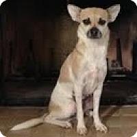 Adopt A Pet :: Lilac - Phoenix, AZ