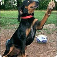 Adopt A Pet :: Scuttlebutt Porter - Dallas, TX