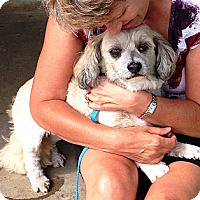 Adopt A Pet :: Clover - Osseo, MN
