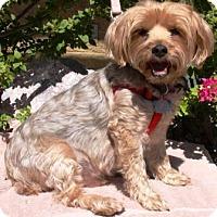 Adopt A Pet :: Elvis - Gilbert, AZ