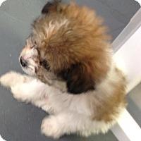 Adopt A Pet :: Ryan - Meridian, ID