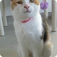 Adopt A Pet :: Shannon - Hamburg, NY