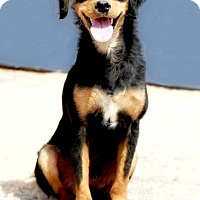 Adopt A Pet :: Miney - Apple Valley, CA