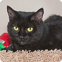 Adopt A Pet :: Negrita - Elmwood Park, NJ