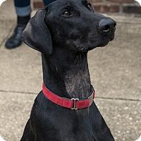 Adopt A Pet :: Orion - Manhasset, NY