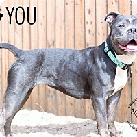Adopt A Pet :: Love - Mt Vernon, NY