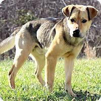 Adopt A Pet :: Jango - Waldorf, MD