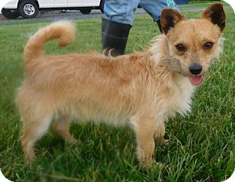 Terrier (Unknown Type, Medium) Mix Dog for adoption in Rockville, Maryland - Willie Nelson