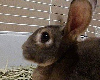 Rex for adoption in Seattle c/o Kingston 98346/ Washington State, Washington - Ashton