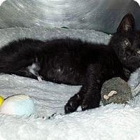Adopt A Pet :: Inky Dinky - Marlton, NJ