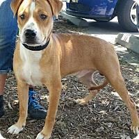 Adopt A Pet :: Marshall - Lake Jackson, TX