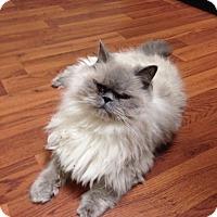 Adopt A Pet :: Winslow - Woodstock, ON