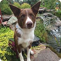 Adopt A Pet :: Ruckus - Saskatoon, SK