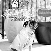 Adopt A Pet :: Brimlee - Frederick, MD