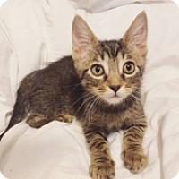 Adopt A Pet :: Linus - Cerritos, CA