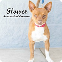 Adopt A Pet :: Flower - Modesto, CA