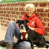 Adopt A Pet :: Tucker - Elyria, OH