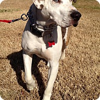 Hound (Unknown Type) Mix Dog for adoption in Pulaski, Tennessee - Sooner