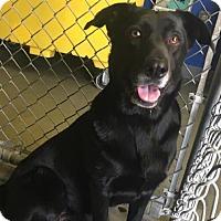Adopt A Pet :: Jazz - Denver, CO